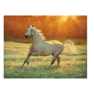That's My Horse Large Blank Card-0