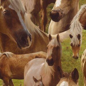 Palomino Horse Wallpaper-3656